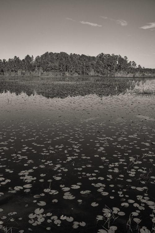 Bonnet Pond / Moss Park