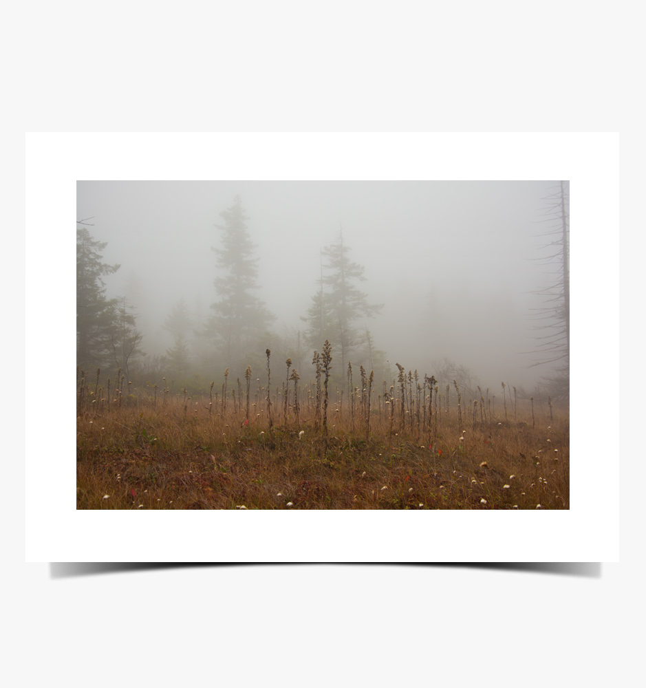 Print 1083 - Cranberry Bogs, Dolly Sods