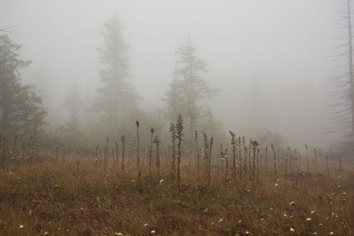 Dolly Sods Wilderness - WV