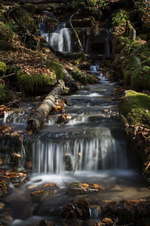 Seneca Creek - WV