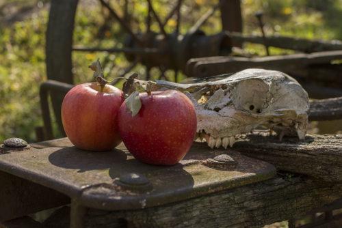Apples - WV