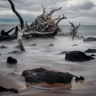 Big Talbot Island State Park – Nikon D500