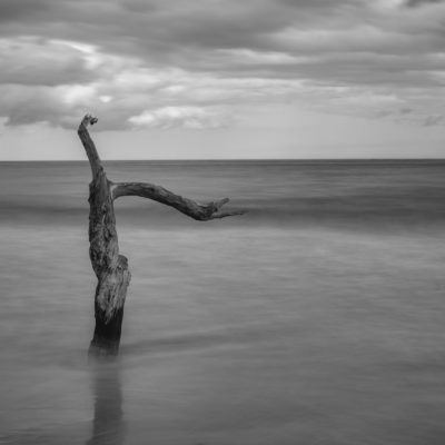 Big Talbot Island State Park in Black and White – Nikon D500