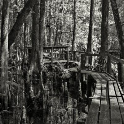 Highlands Hammock State Park – Nikon D7100