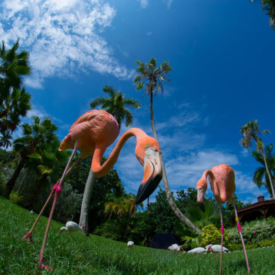 Flamingos – Nikon D7100 & Bower 8mm Fisheye