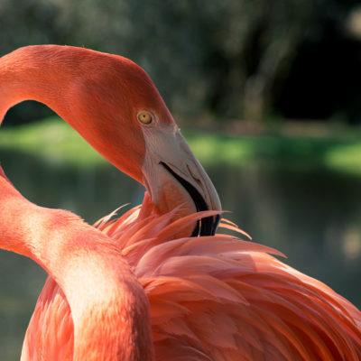 Flamingo – Nikon D7100