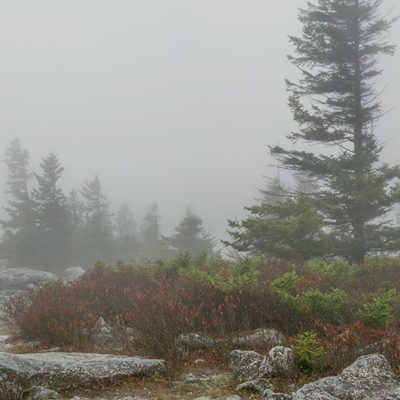 Dolly Sods in Fog Panorama – Nikon D7100 & Tamron 18-400