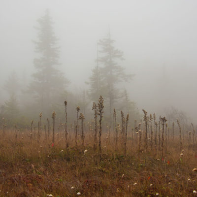 Dolly Sods Cranberry Bogs in Fog – Nikon D7100 & Tamron 18-400