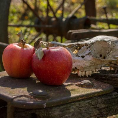 Late Harvest – Nikon D7100
